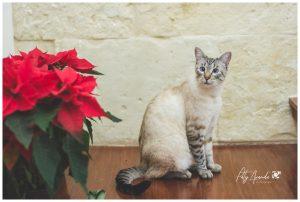 fotografia navideña